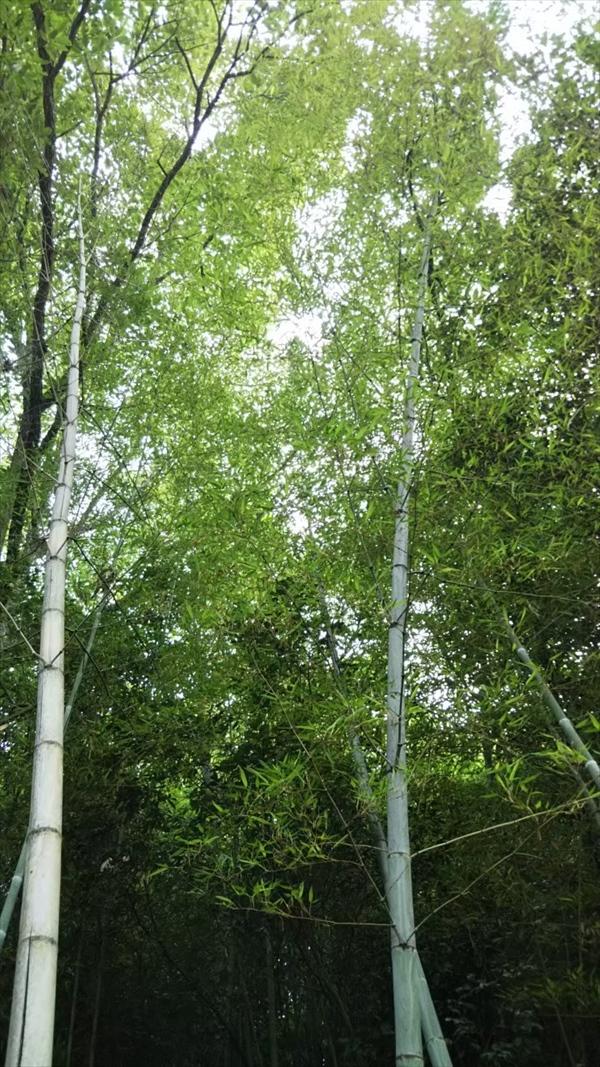 竹と瓦編♡_191008_0018_R